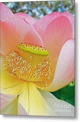 Pink Lotus Lily Metal Print