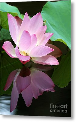 Pink Lotus Reflected In The Lake Metal Print