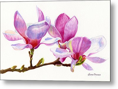 Pink Magnolia Blossoms On A Branch Metal Print