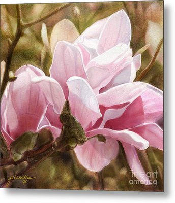 Pink Magnolia One Metal Print by Joan A Hamilton