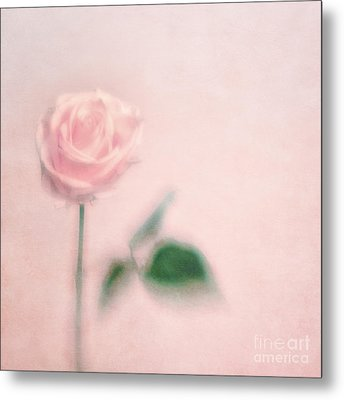 pink moments II Metal Print by Priska Wettstein