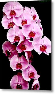Pink Orchid Metal Print by Menachem Ganon