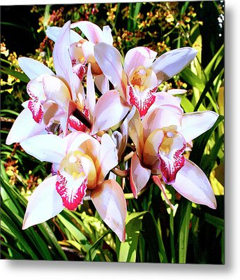 Pink Spirit Orchids Palm Springs Metal Print