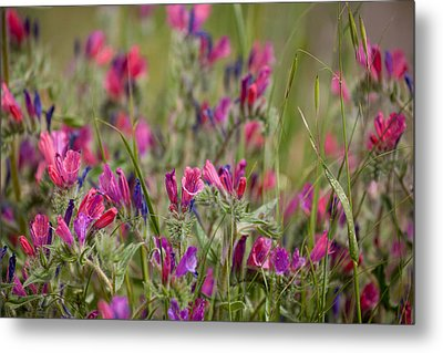 Metal Print featuring the photograph Pink Outburst by Uri Baruch
