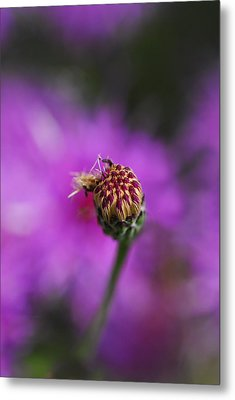Metal Print featuring the photograph Pink Perfect by Susan D Moody