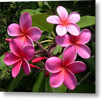 Metal Print featuring the digital art Pink Plumeria by Claude McCoy
