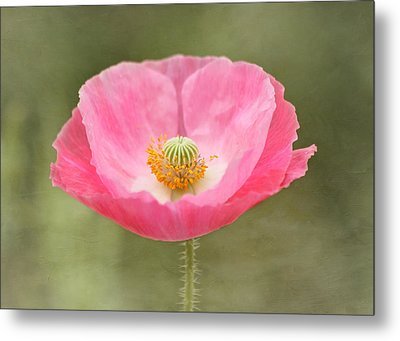 Pink Poppy Flower Metal Print by Kim Hojnacki