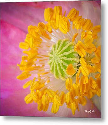 Pink Poppy Too Squared Metal Print
