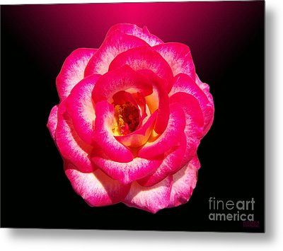 Metal Print featuring the photograph Pink Queen  by Hanza Turgul