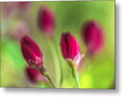 Pink Red Buds Metal Print by Arkady Kunysz