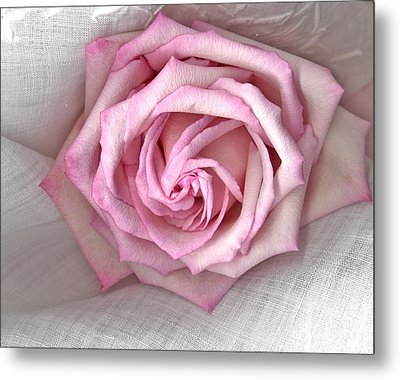 Pink Rose And Linen Metal Print by Sandra Foster