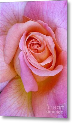 Pink Rose Closeup II Metal Print