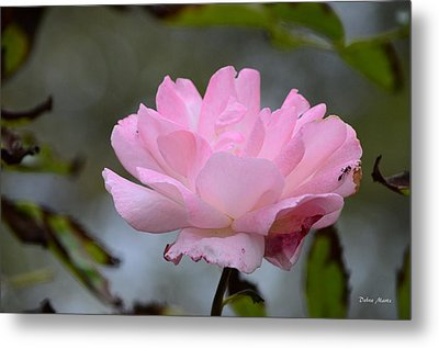 Metal Print featuring the photograph The Last Rose by Debra Martz