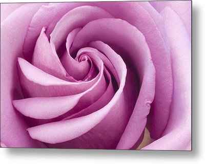 Pink Rose Folded To Perfection Metal Print by Sandra Foster