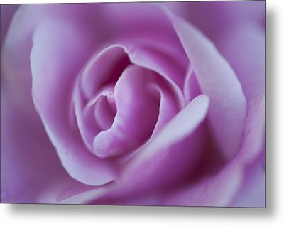 Pink Rose Metal Print by Phyllis Peterson