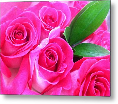 Metal Print featuring the photograph Pink Roses by Alohi Fujimoto