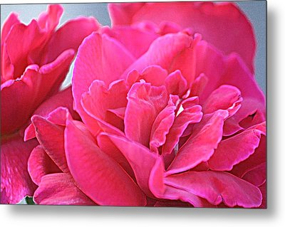 Pink Roses Metal Print by Donna G Smith