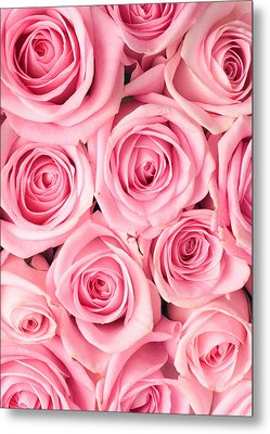 Pink Roses Metal Print by Munir Alawi