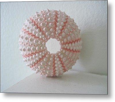 Pink Sea Urchin Still Life Metal Print