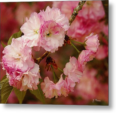 Pink Spring Blossoms Metal Print by James C Thomas