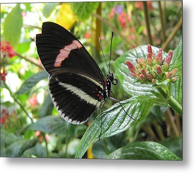 Pink Stripe Metal Print by Jennifer Wheatley Wolf