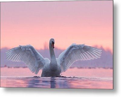 Pink Swan Metal Print by Roeselien Raimond