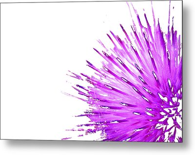 Pink Thistle  Metal Print by Rich Collins