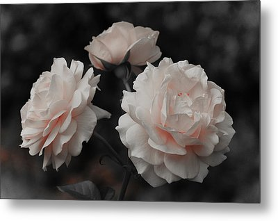 Metal Print featuring the photograph Pink Trio by Michelle Joseph-Long