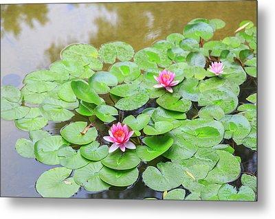 Pink Water Lilies, Lake View Hotel Metal Print
