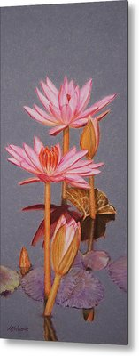 Pink Water Lilies Metal Print by Marna Edwards Flavell