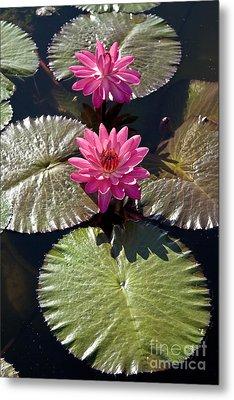 Pink Water Lily IIi Metal Print by Heiko Koehrer-Wagner