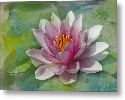 Pink Water Lily Metal Print by Rebecca Cozart