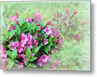 Metal Print featuring the photograph Pink Weigela by Trina  Ansel