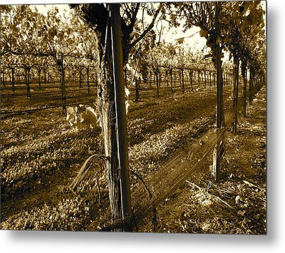 Metal Print featuring the photograph Pinot Growth by Paul Foutz