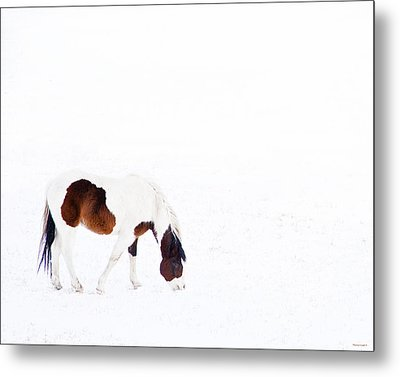 Pinto Pony Metal Print by Theresa Tahara