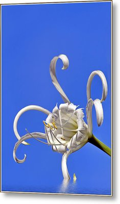Pinwheel Flower With Flood Effect Metal Print by Geraldine Scull