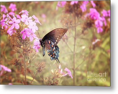 Pipevine Swallowtail Butterfly Metal Print by Lena Auxier
