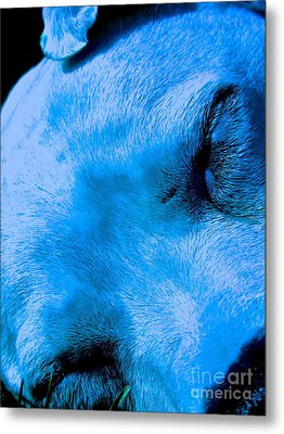 Pit Bull Lullaby// Dream Until Your Dreams Come True Metal Print by Q's House of Art ArtandFinePhotography