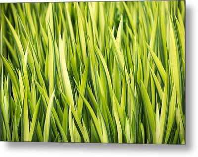 Plant Abstract 1 Metal Print by Rebecca Cozart