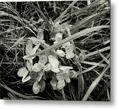 'plant And Grass With Dewdrops' Metal Print