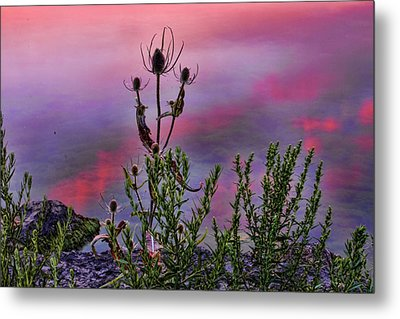 Plant Life By The Water Metal Print