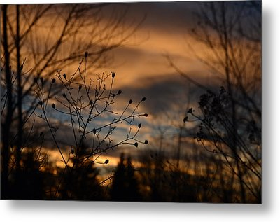 Planted Sunset Metal Print