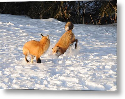 Play Time Metal Print by Sandra Updyke
