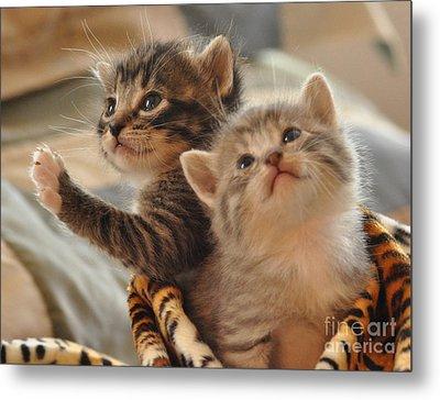 Playful Kittens Metal Print