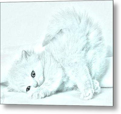 Playful Kitty Metal Print by J D Owen