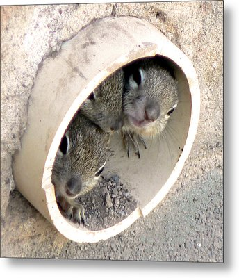 Playing In A Pipe Metal Print