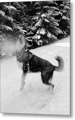 Playing In The Snow Metal Print by Carol Groenen