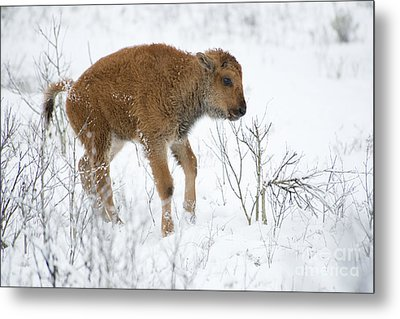 Playing In The Snow Metal Print