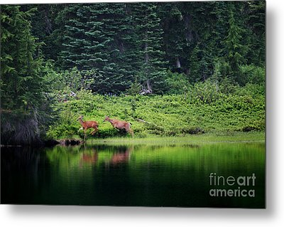 Playing In The Wild Metal Print by Deena Otterstetter