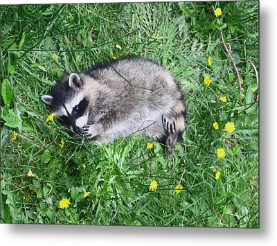 Please Dont Eat The Daisy Metal Print by Kym Backland